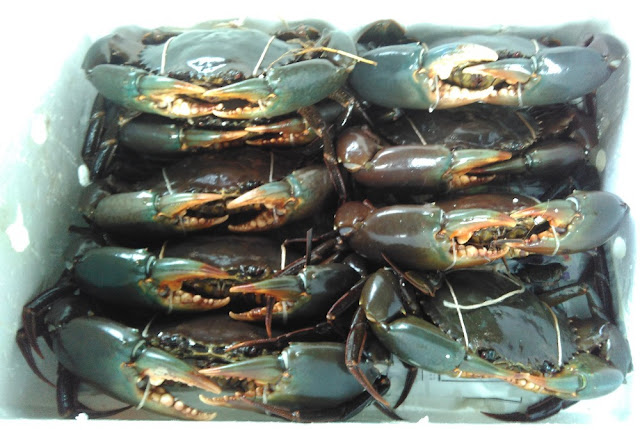 Crab Export Philippines