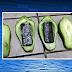 Dupla é detida suspeita de tentar entrar em cadeia com celulares escondidos dentro de chuchus e marmitas