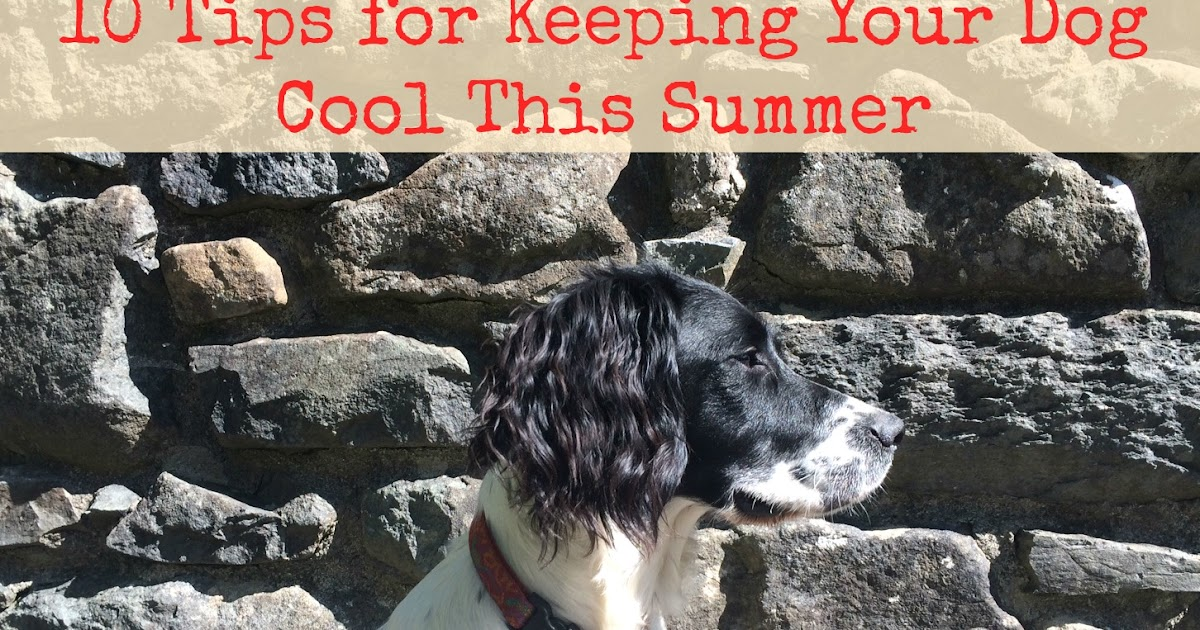 Me And My Shadow How To Keep Your Dog Cool This Summer
