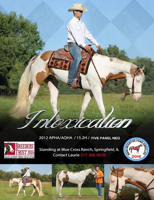 Intoxication, Stallion