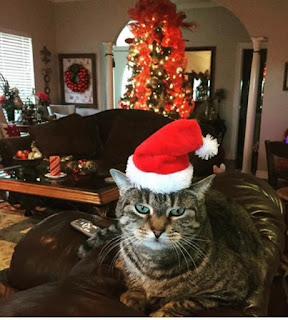 Ed, our grumpy cat