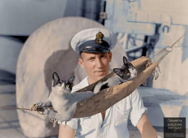 HMAS Nizam ship's cats color photos of World War II worldwartwo.filminspector.com