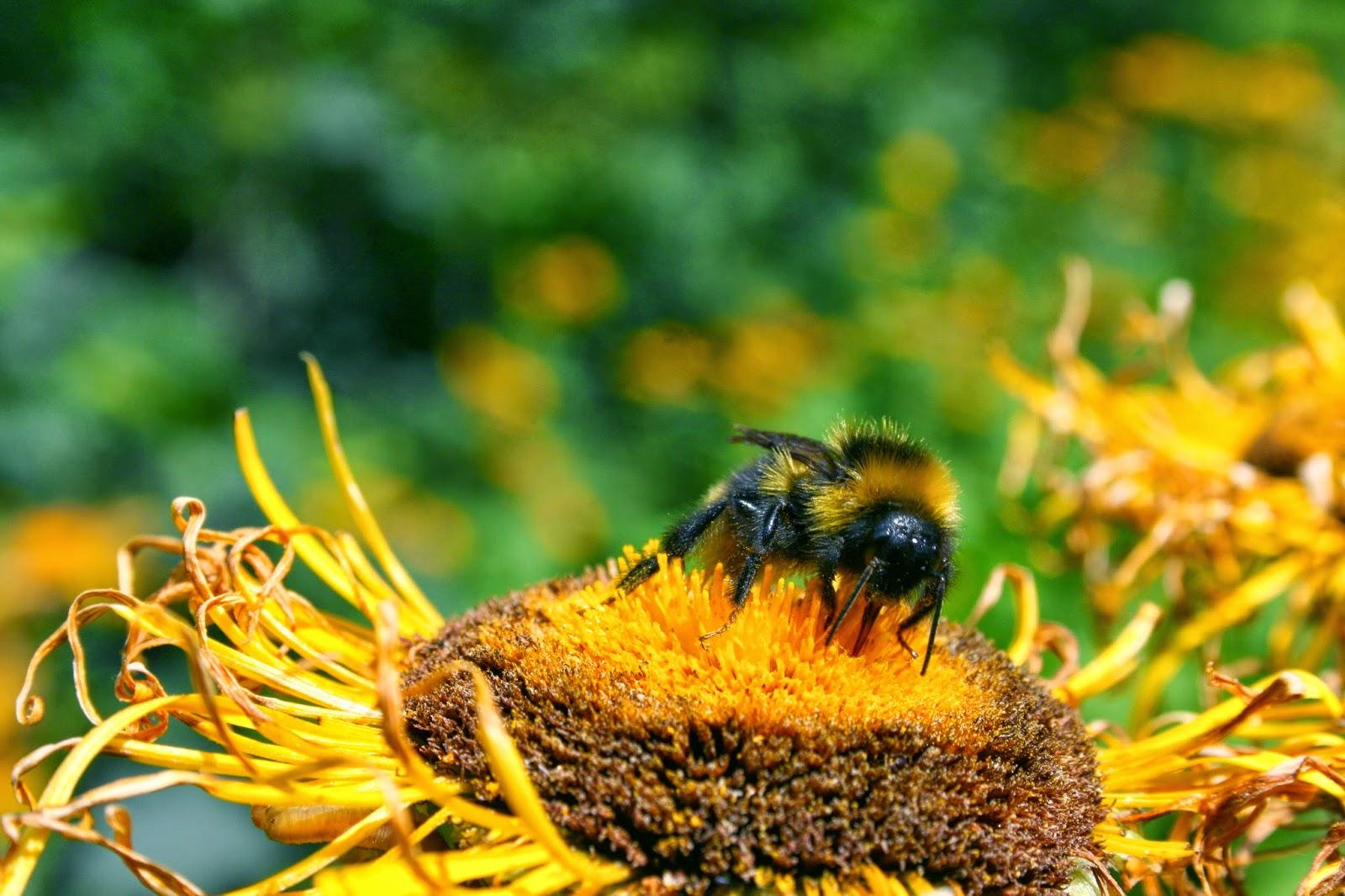 Garden Allies Ground Nesting Bees Linkedin