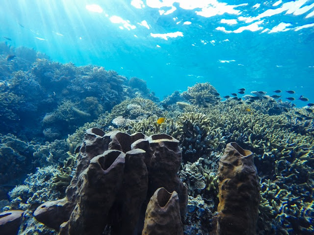 Exploring the World's Most Important Coral Reef Ecosystem in the Togean Islands