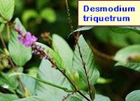 hemorrhoids cure treatment