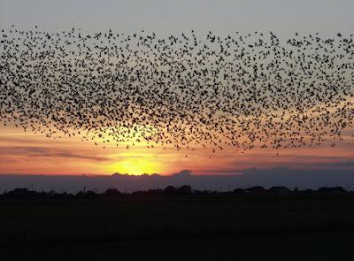 Kapan Burung Walet Bermain Ke Gedung Baru ?