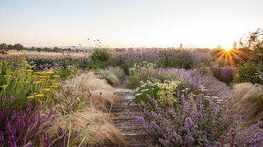 Un jardín naturalista en Francia y una foto finalista en IGPOTY N.10