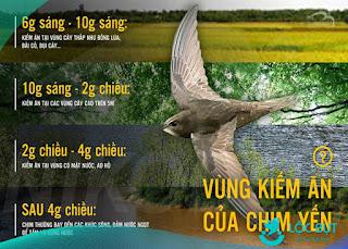 Thời gian và vùng chim yến kiếm ăn trong ngày.