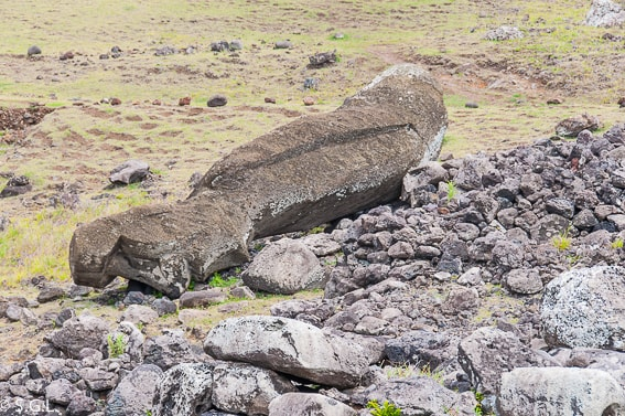 Moai caido en la Isla de Pascua. Historia de la Isla de Pascua