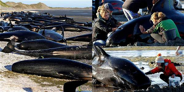 3 sismos fuertes y un terremoto fuerte se han registrado cerca donde murieron ballenas .