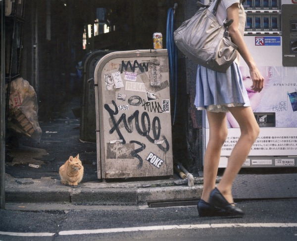 cat looking at legs