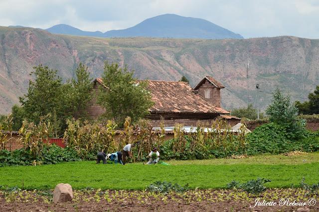 Travail dans les champs dans la Vallée Sacrée