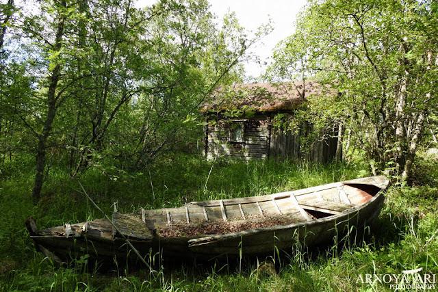 Lohikari, Pyhäjoki