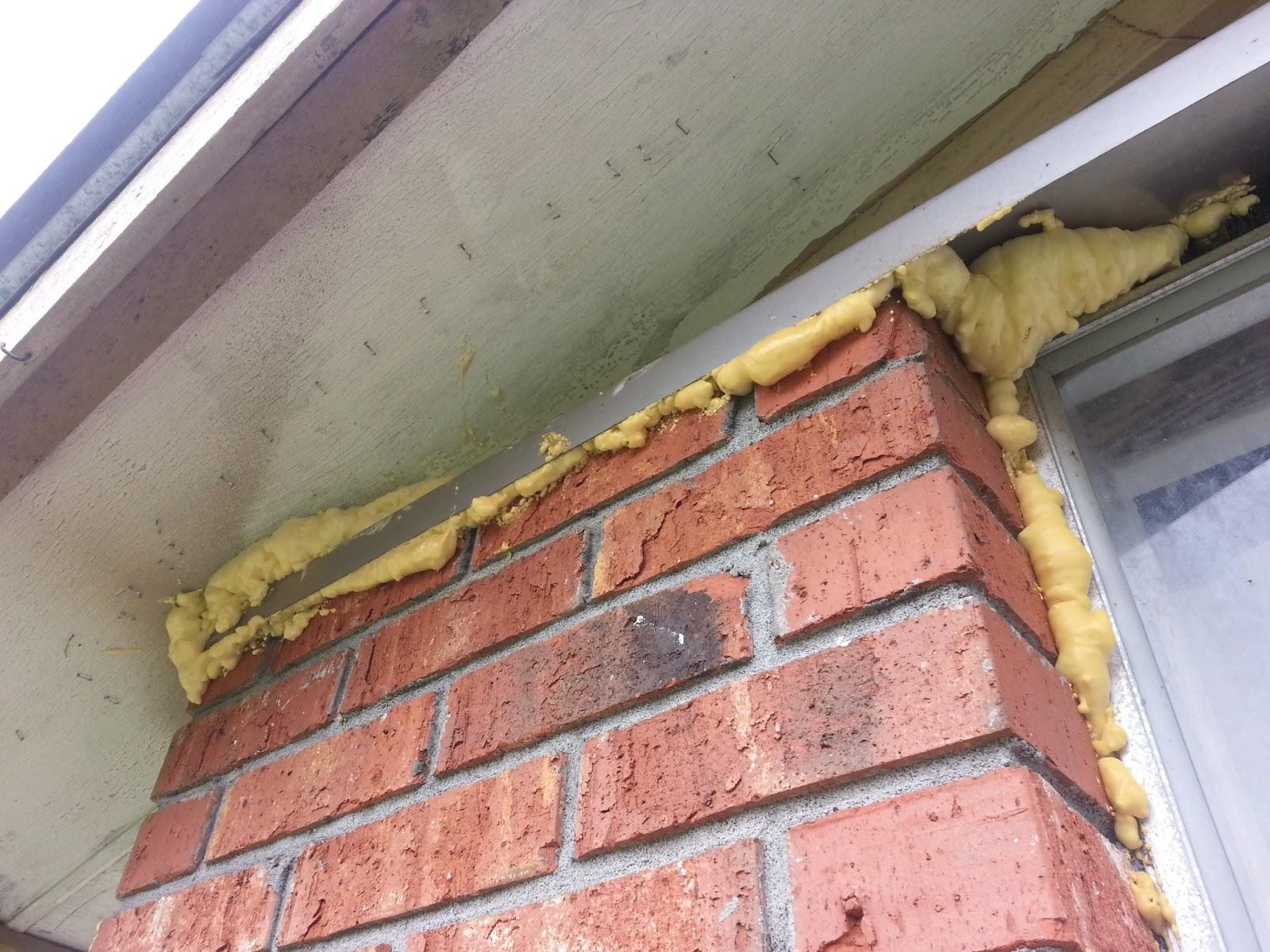 Bat Control Disaster Repairs