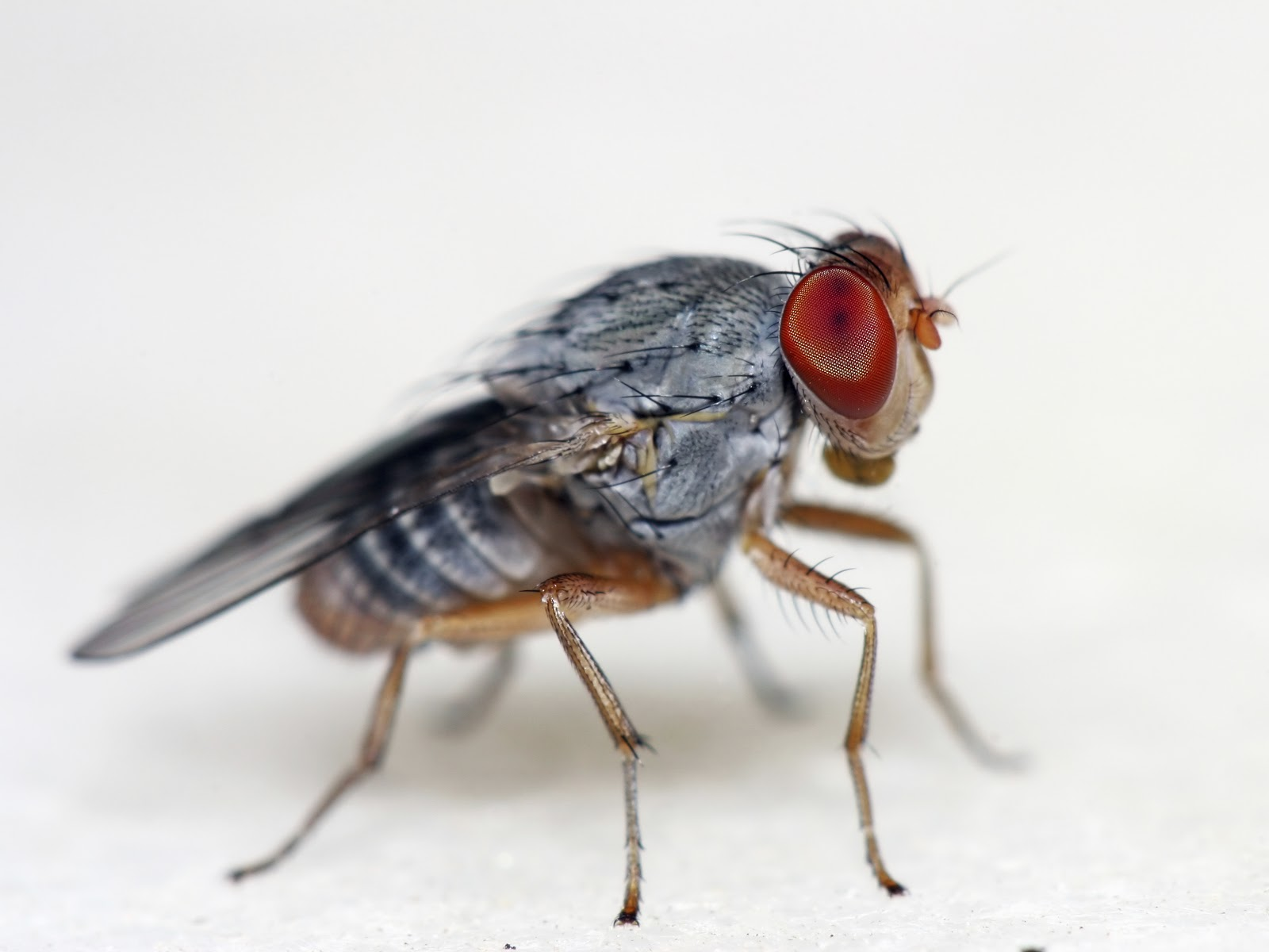 How To Get Rid Of Flies In The Kitchen Sink