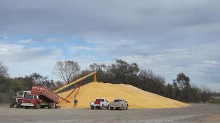 [Image: corn.jpg]