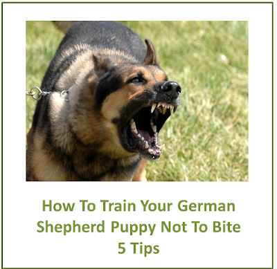 How To Train Your German Shepherd Puppy Not To Bite – 5 Tips