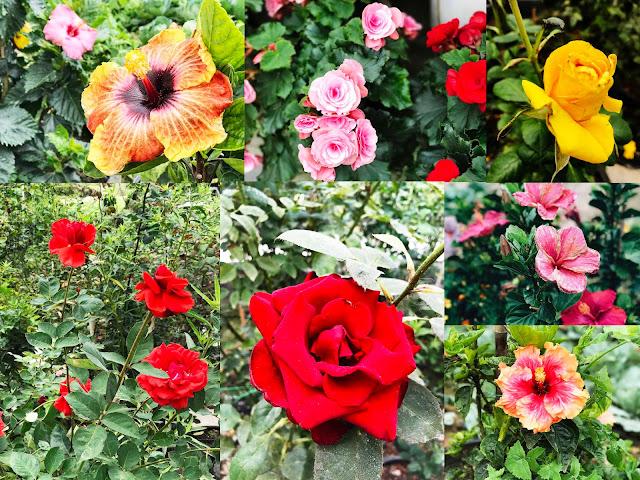 Bunga-bunga segar di Cameron Highlands