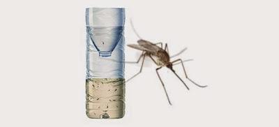 piège à moustiques naturel