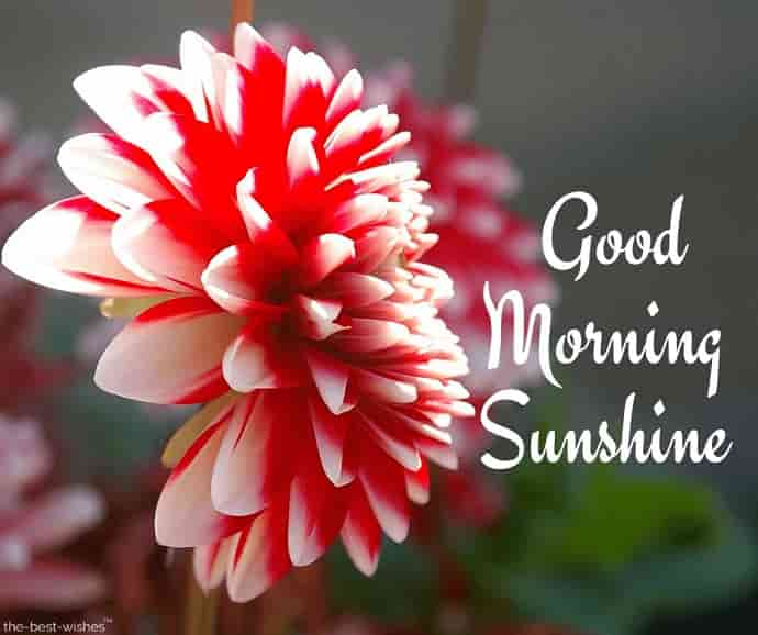 best good morning sunshine image with flower