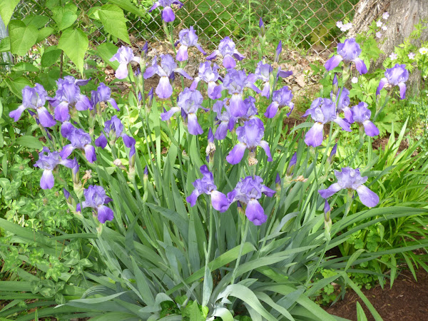 Friends Of The Goodwin Library Plant Sale Sat May 6th, 10-2