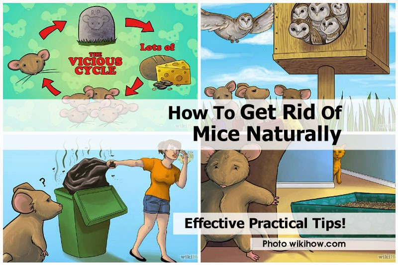 Natural Way To Get Rid Of Mice Outside The House
