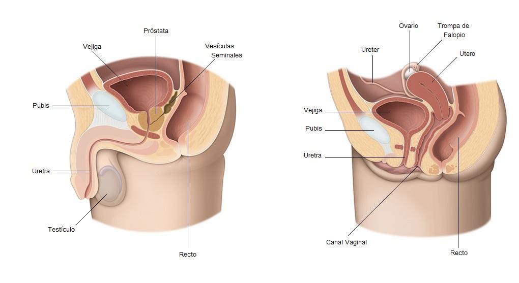 incontinencia después de una cirugía radical de próstata cuánto dura 2