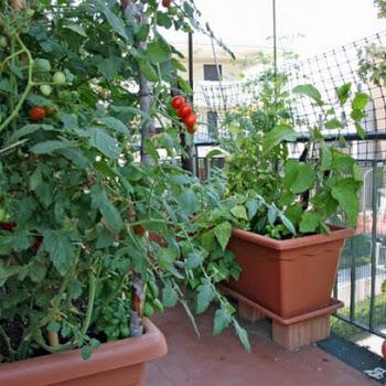 Η κηπουρική λειτουργεί αγχολυτικά... Δείτε γιατί