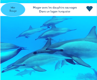 http://www.dolphinesse.net/p/blog-page_10.html