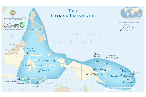 coral day triangle