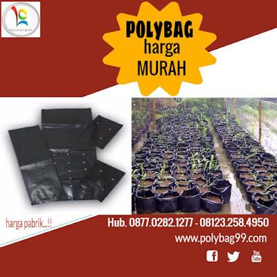 Lada perdu yakni suatu tumbuhan varietas lada yang sering dibudidayakan guna menjawab per Budidaya Lada Perdu di Polybag