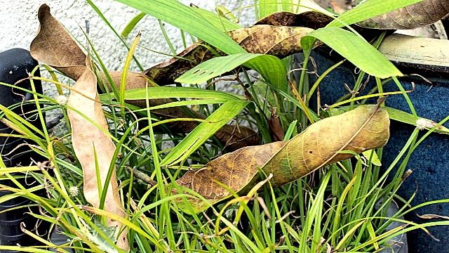 OM S Zuiko Auto-Zoom 35-70mm F4, Sample image 01