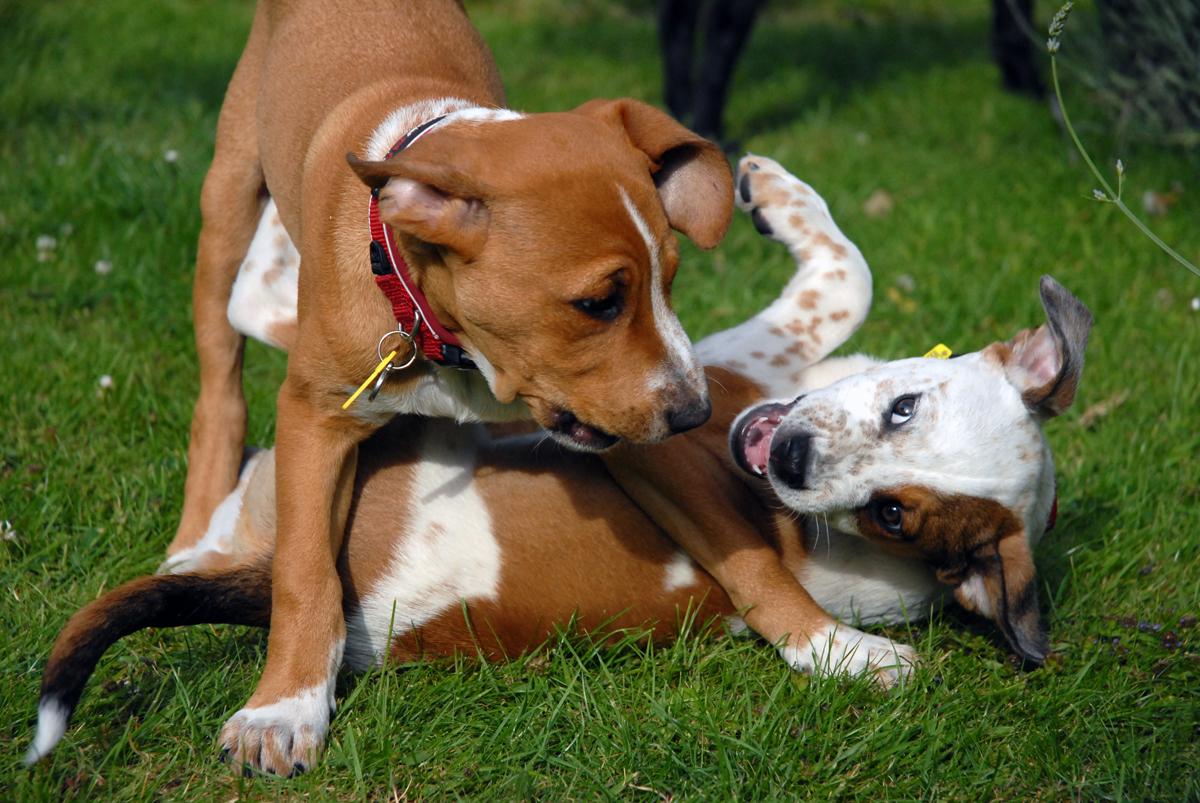 Dog Food Aggression Towards Cats