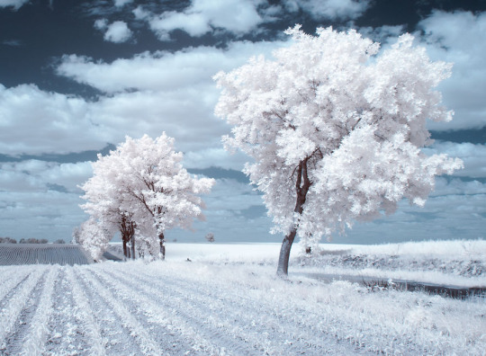 The Majestic Beauty Of Trees Photography 4