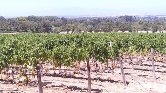 Constantian viinialue - www.blancdeblancs.fi