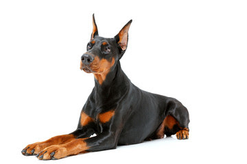 Doberman name origin