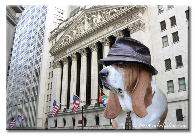 Bentley Basset in hat, shades and tie on Wall St.