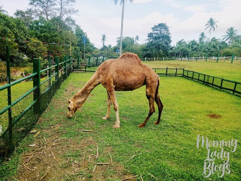 Day Trip at Paradizoo Tagaytay