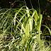 Energie uit komkommerloof en Olifantsgras