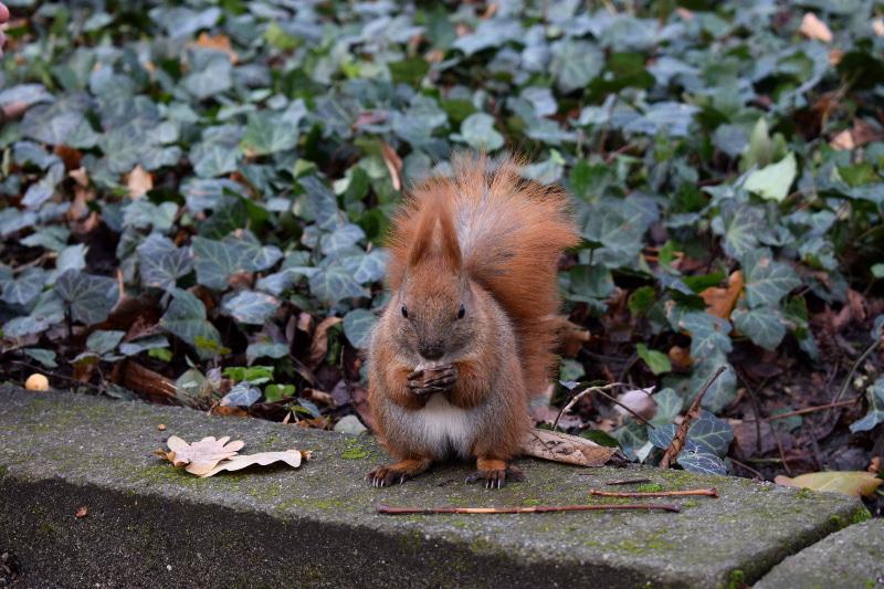 futro, jesień, Warszawa, Łazienki, blog, wiewiórka