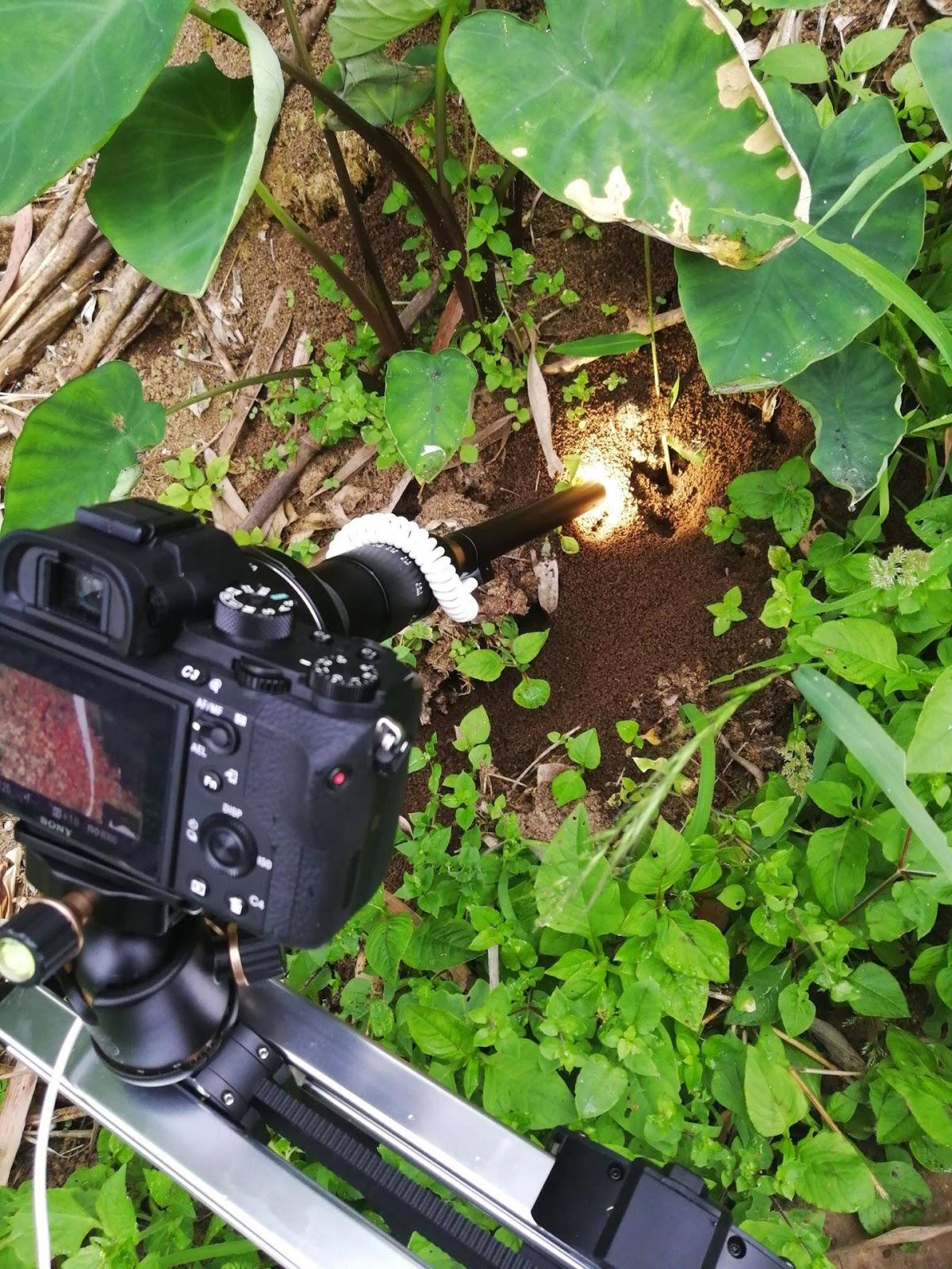 Объектив Laowa 24mm f/14 Relay 2x установлен на камеру Sony A7S II