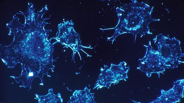 Descubren qué elemento puede ayudar a prevenir y combatir el cáncer