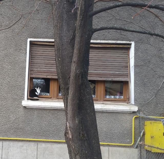 חתול בחלון