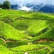 Tripenticer Kerala Tour packages