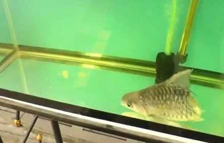 Wow! Ada Ikan Ajaib yang Masih Tetap Hidup Walau Tubuhnya Tinggal Setengah
