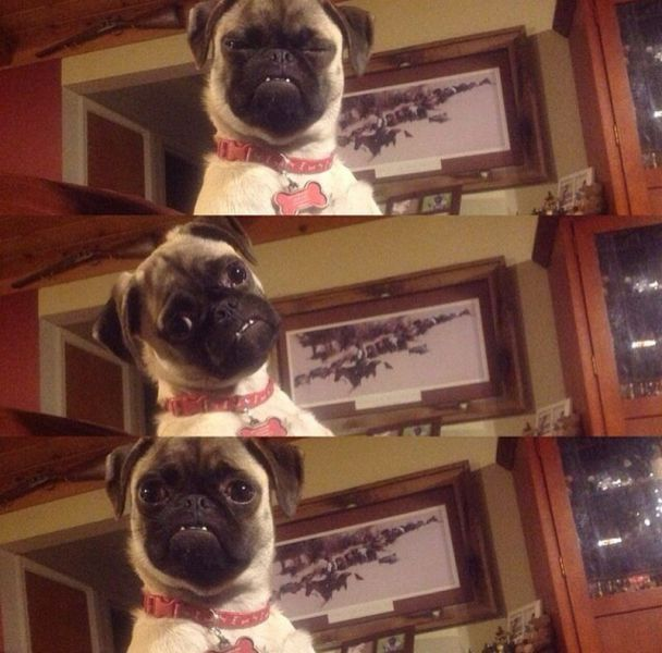 Cute dogs - part 151, funny dog images, adorable dog photos