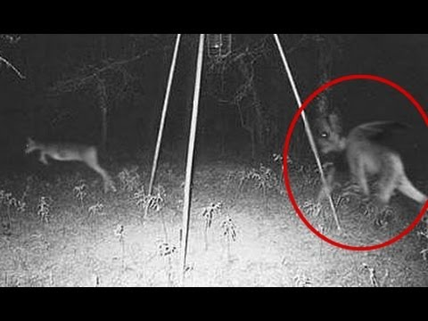ghost capture on forest