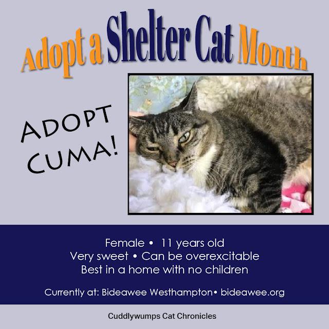 Adopt Cuma! Bideawee westhampton, NY
