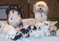 Havanese Breed Dog's family pic
