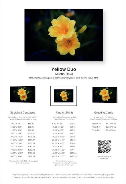 https://milena-ilieva.pixels.com/featured/yellow-duo-milena-ilieva.html